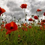 """Lest We Forget"". Centenary of the Battle of the Somme"