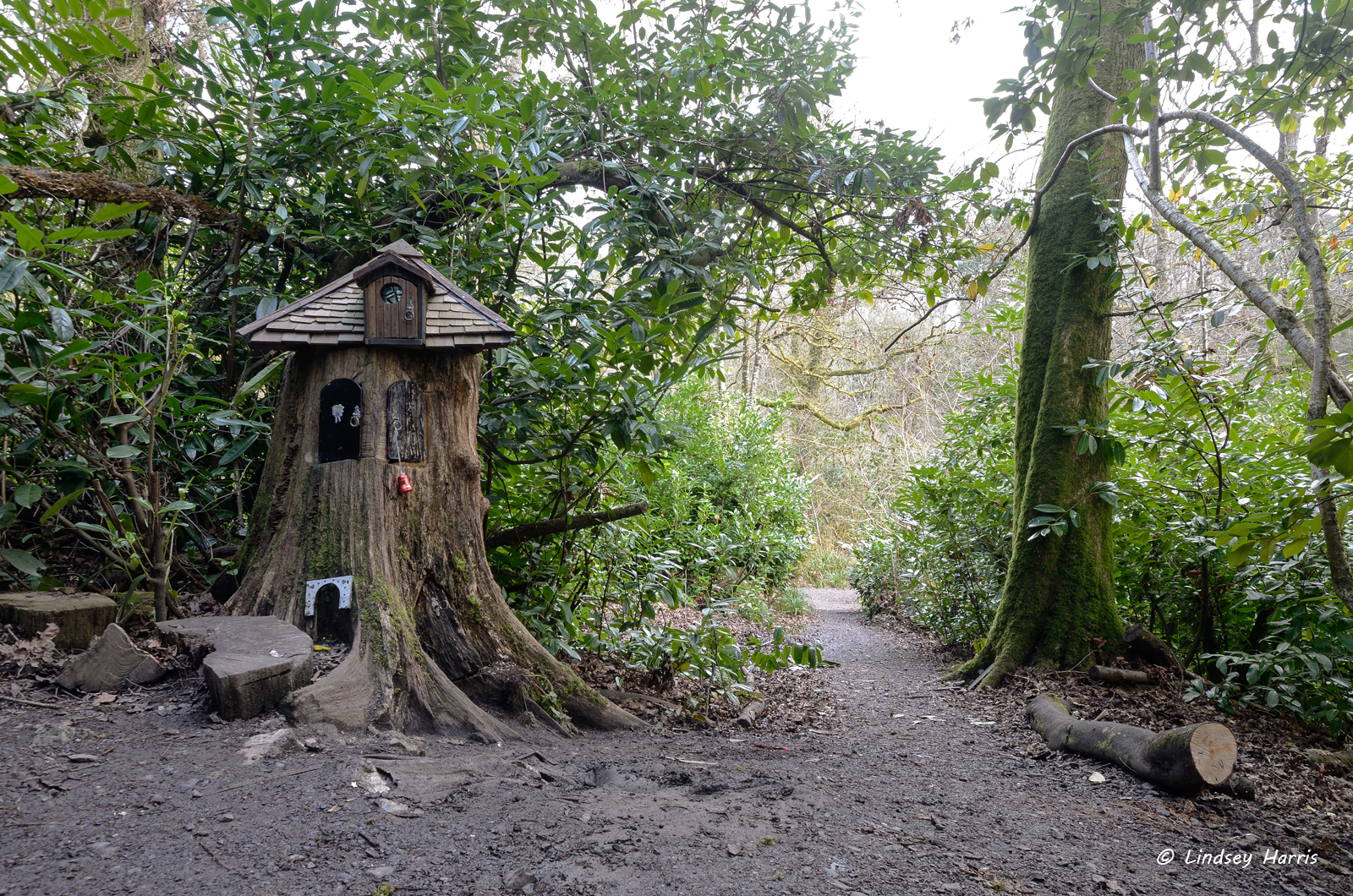 Fairy doors in trees at wayford woods somerset for Fairy house doors