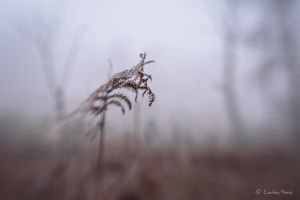 Bracken in the frost