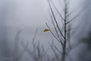 The last leaf standing