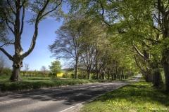 The road to Badbury Rings.