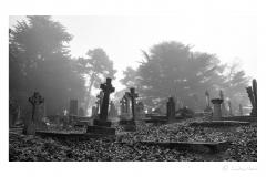 Misty graveyard.
