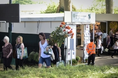 Chelsea Flower Show 2017 great plant sell-off.