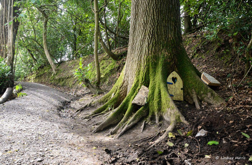 Fairy Doors In Trees At Wayford Woods Somerset