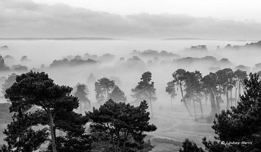 Early morning mist over Dorset