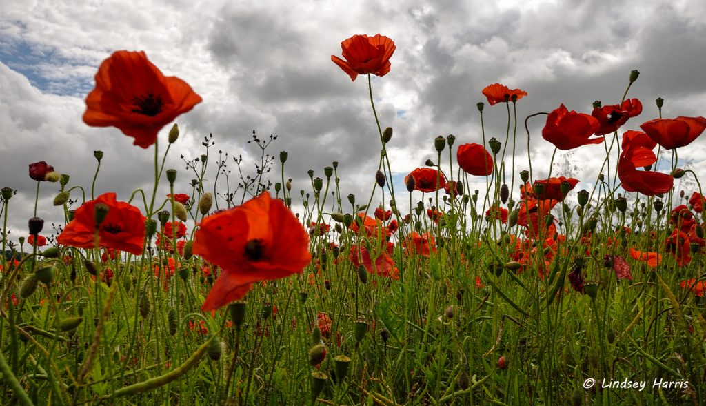 Lest We Forget - Centenary of the Battle of The Somme
