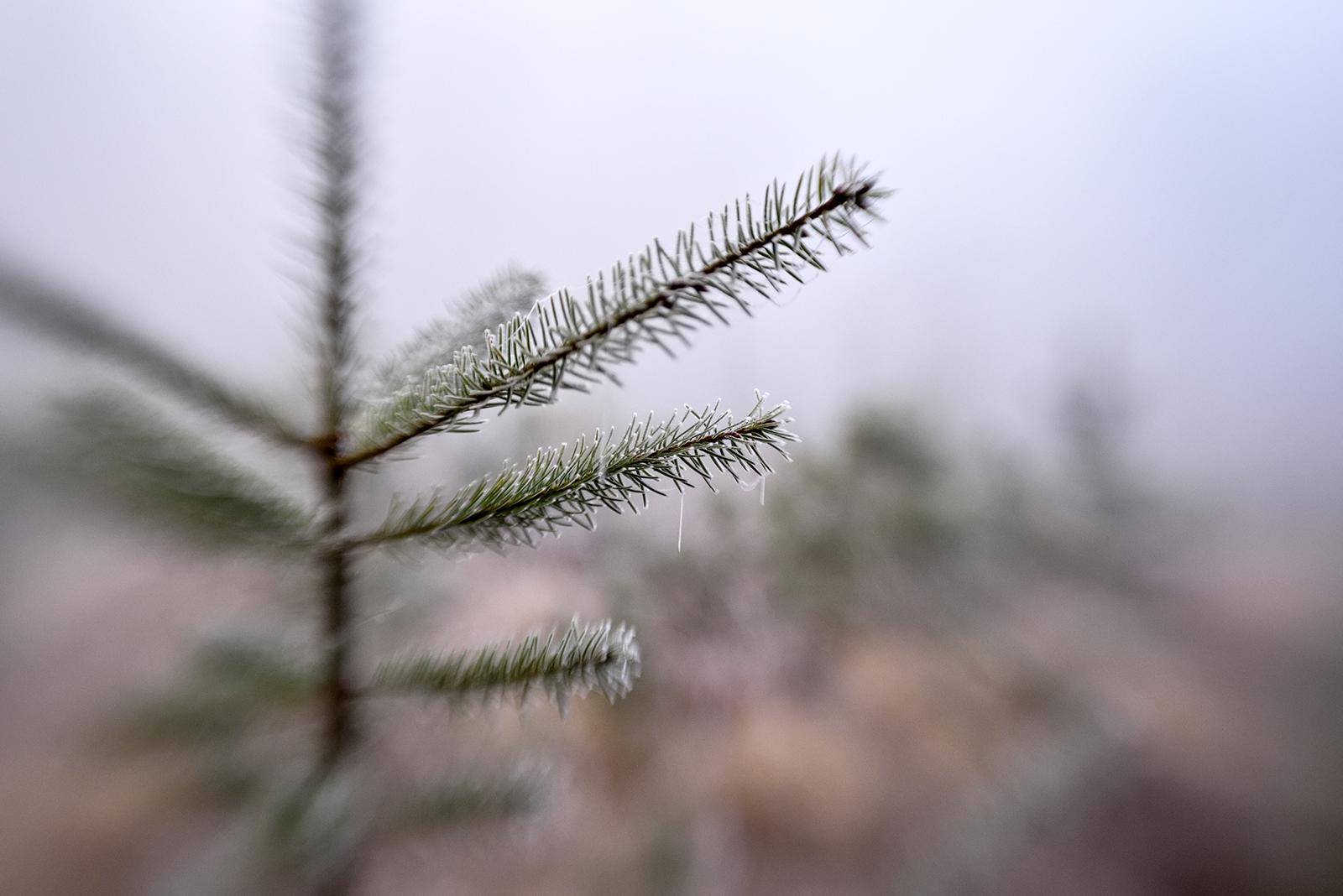 3 Days of Freezing Fog and Ice!