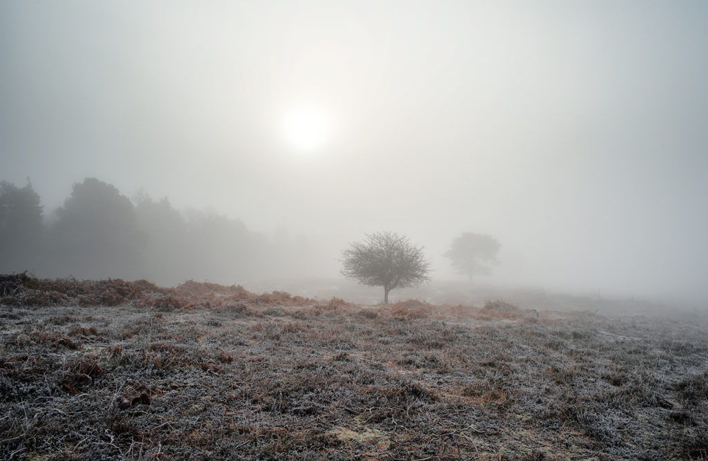 Freezing Fog and Ice in the New Forest.