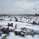 The Ice Forest, Morden Bog, Dorset