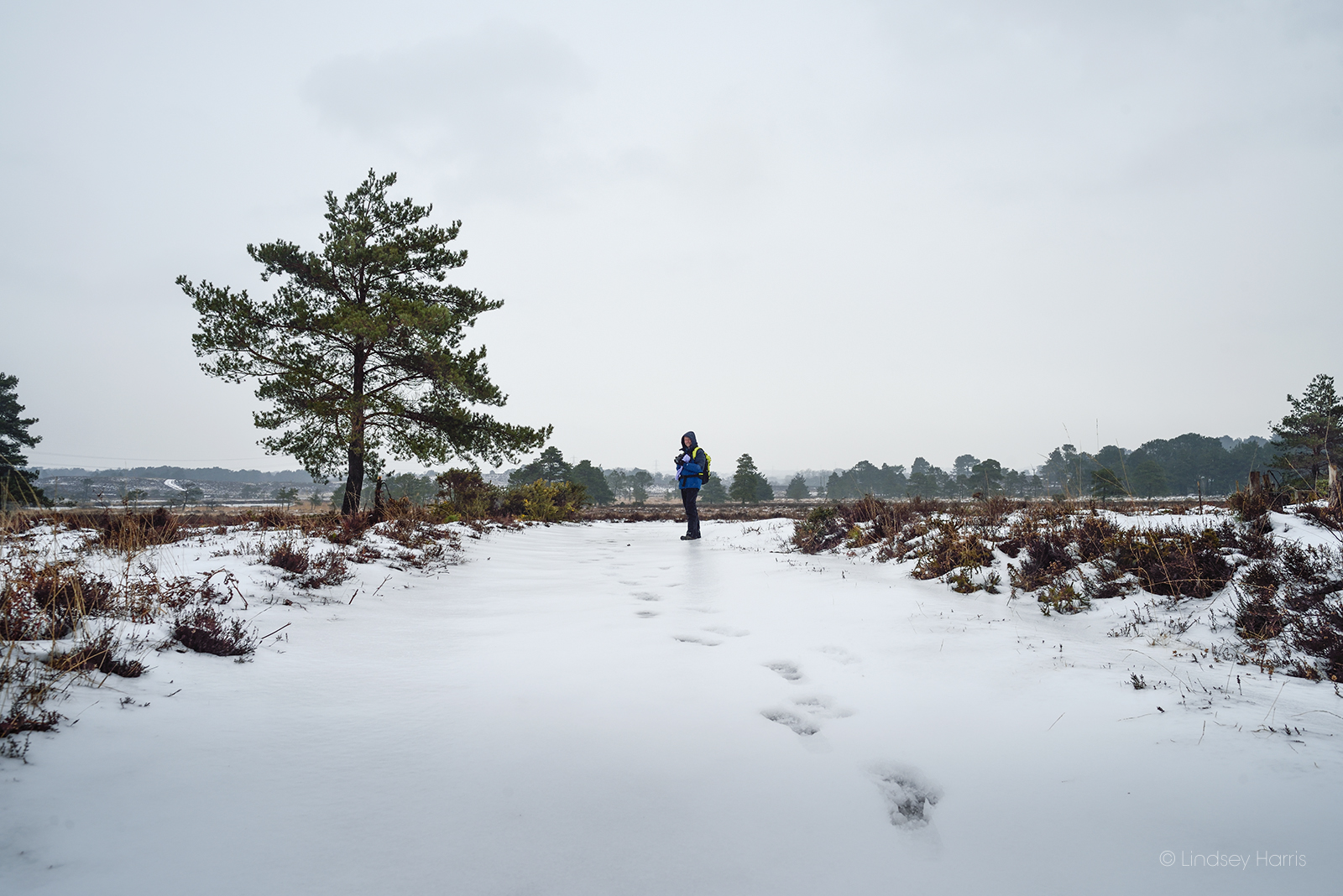 Morden Bog, Dorset in the snow.