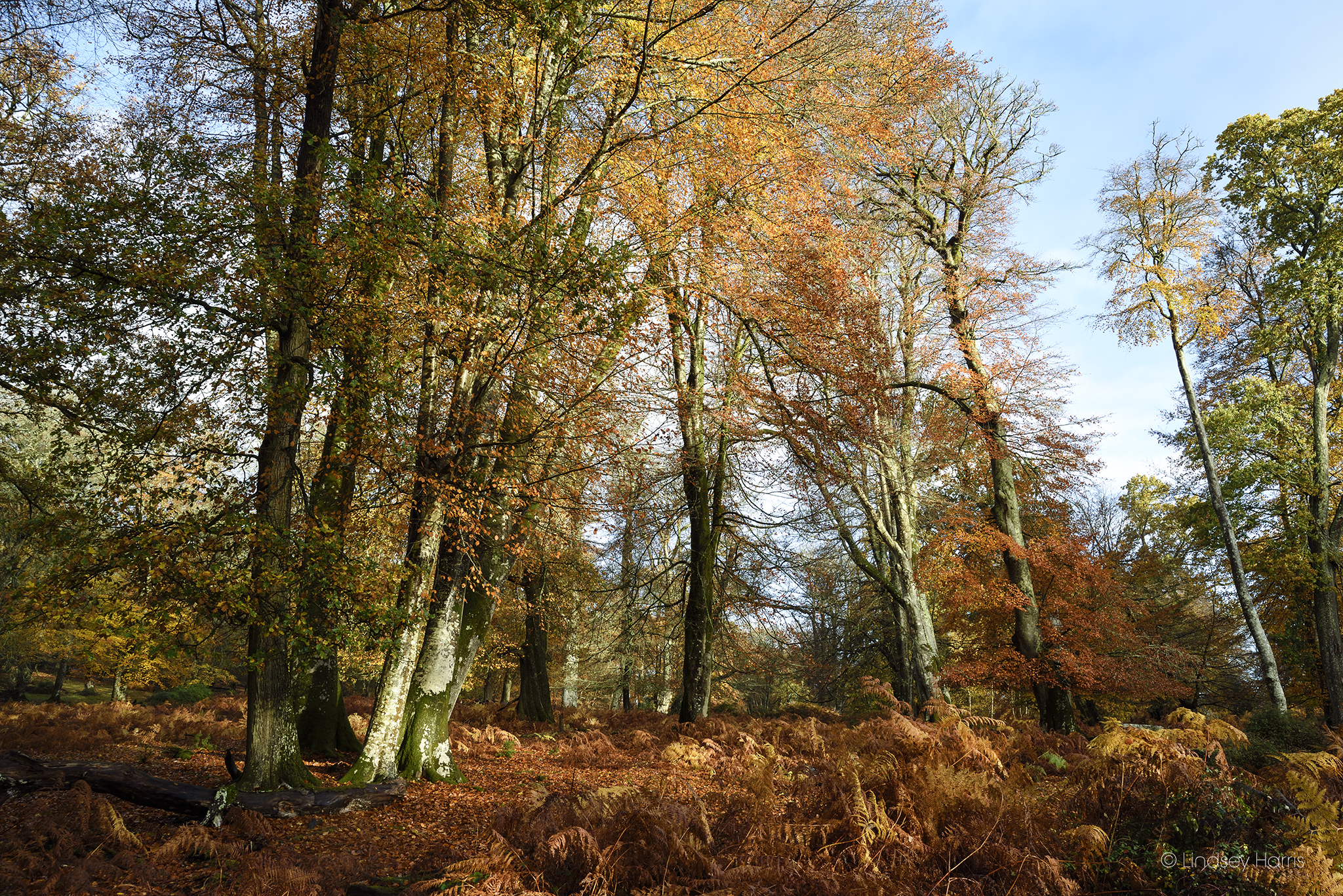 The New Forest, Autumn 2018