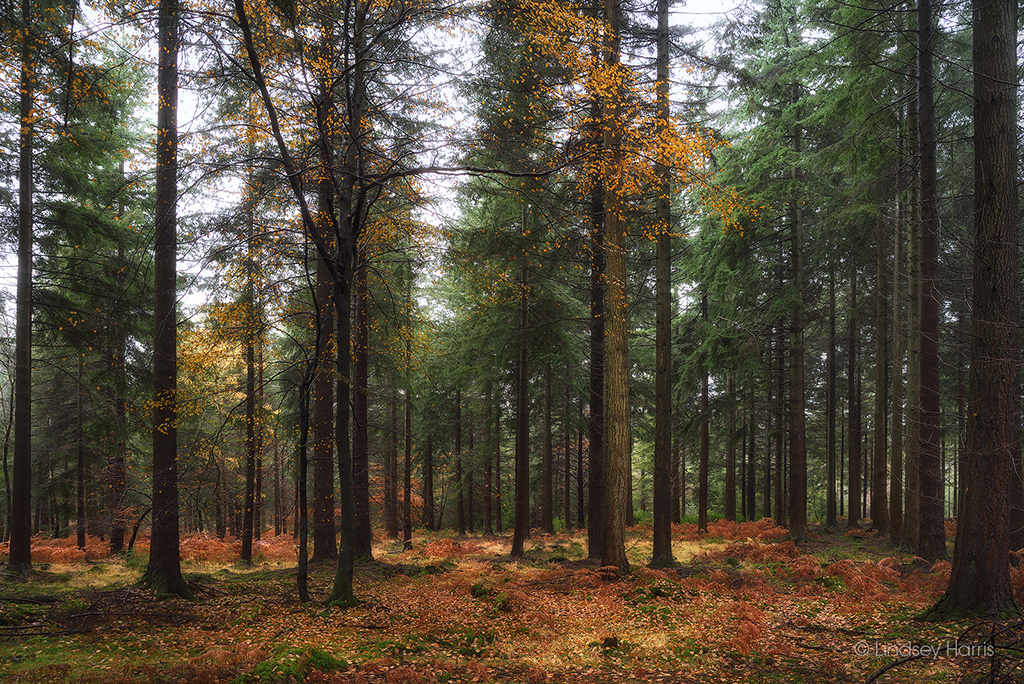 Autumn in the New Forest.