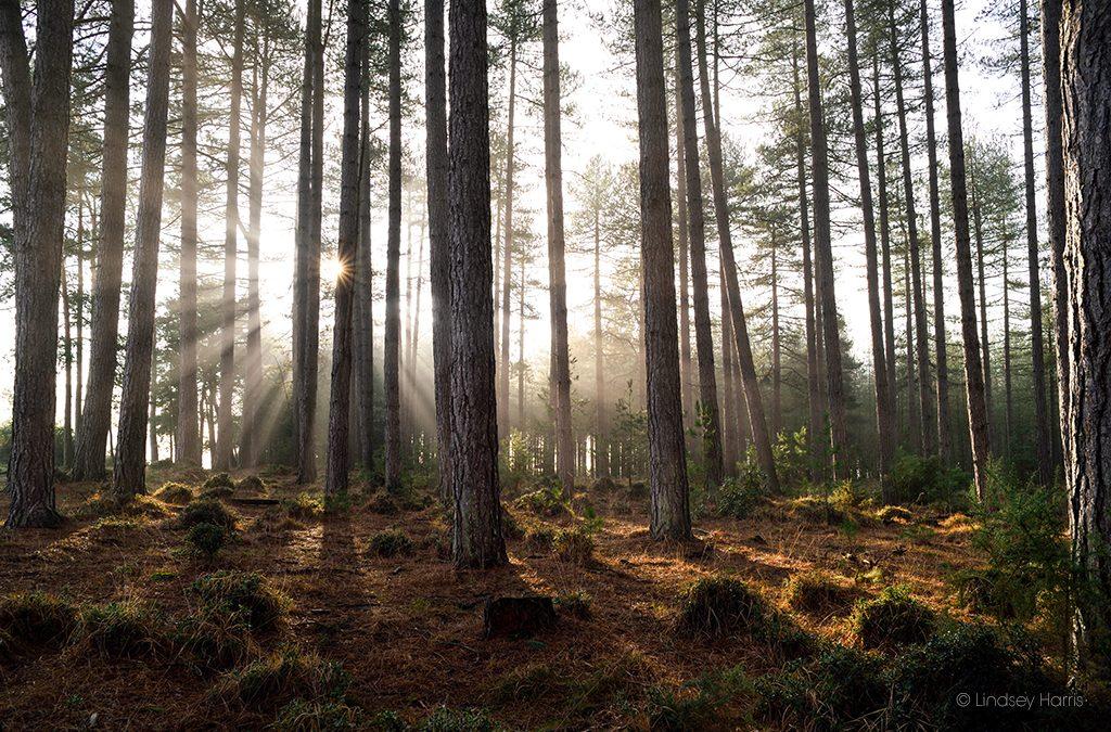 Wareham Forest: Sunshine & Silence