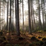 Wareham Forest: Sunshine & Silence