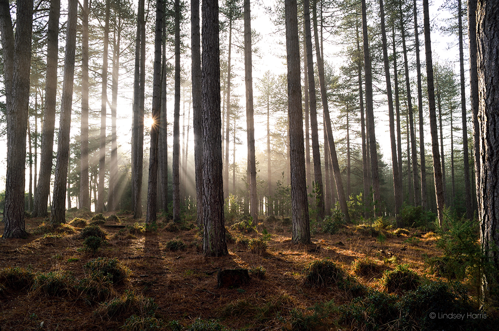 Wareham Forest - early morning sunshine.