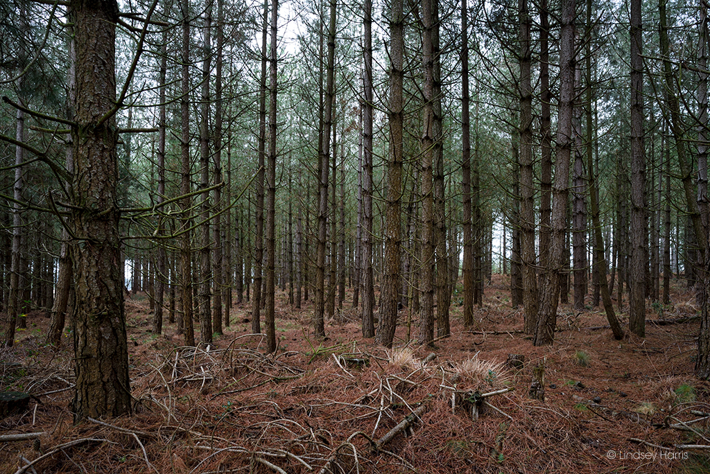 Creepy woods at Wareham Forest, Dorset.