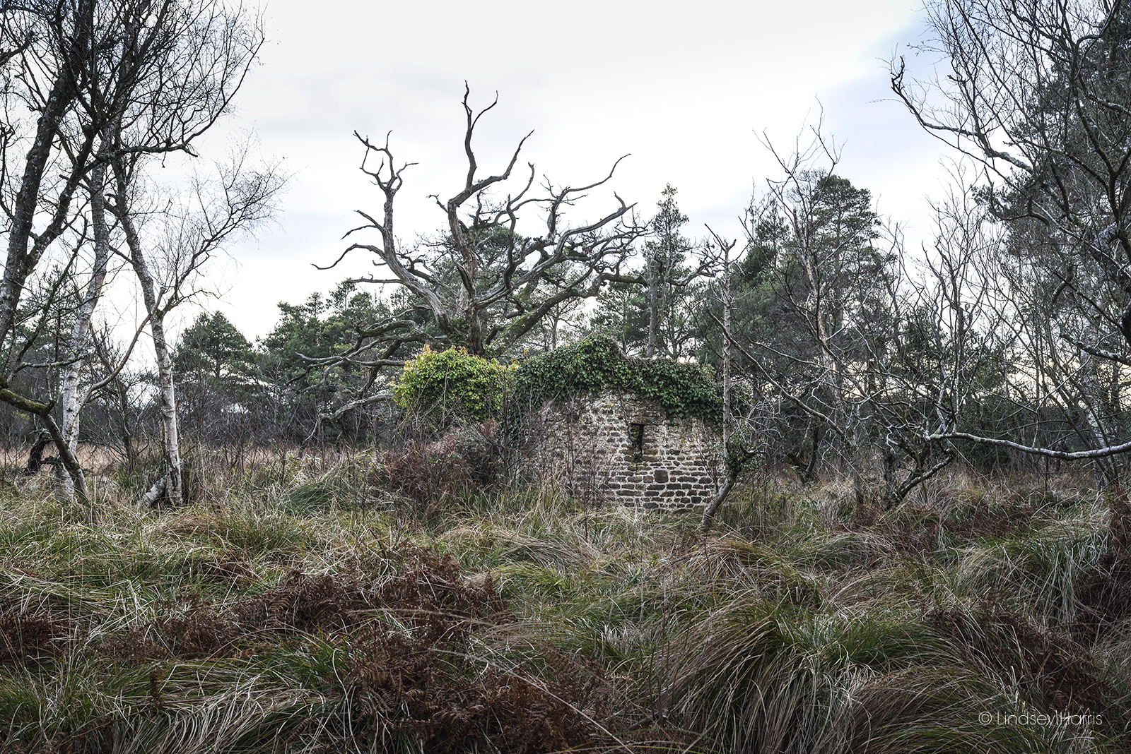 The Decoy Shelter, Decoy Pond, Morden Bog, Wareham.