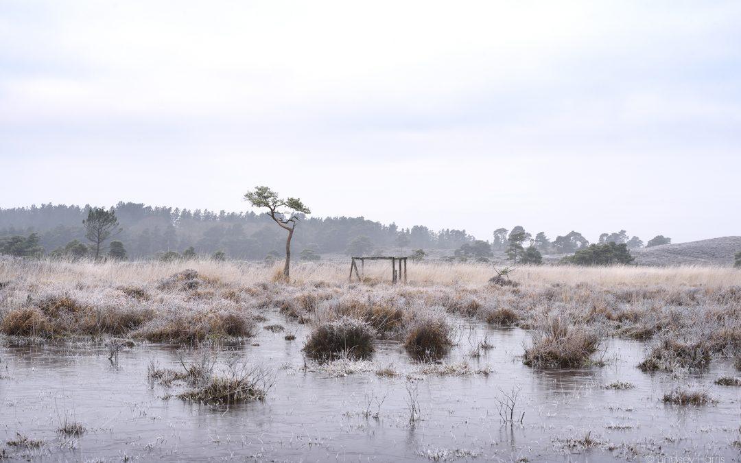 The Old Decoy Pond, Morden Bog National Nature Reserve