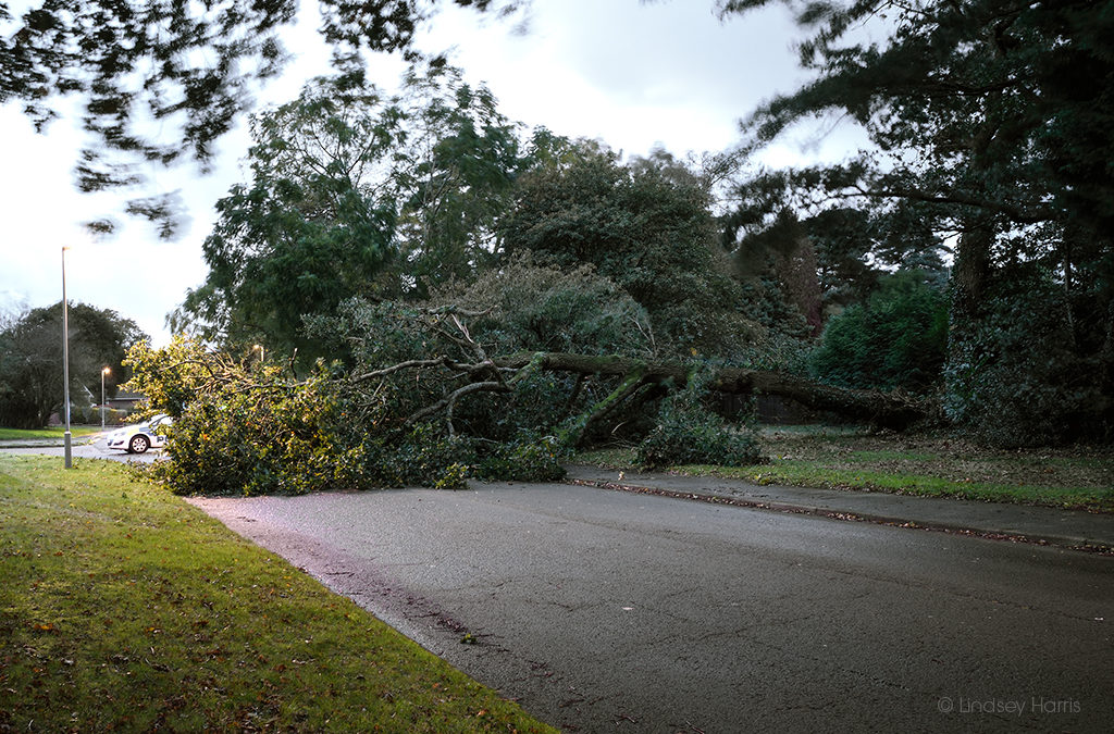 Fallen Tree, Broadwater Avenue, Poole