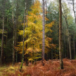 Hidden New Forest: how to find the perfect tree to photograph