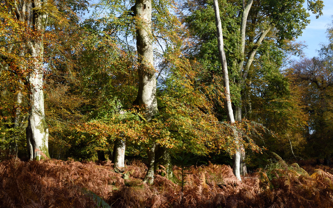 Tree Metamorphosis: New Forest Autumn 2019