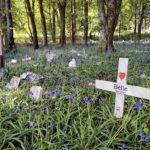 Pet Cemetery, Dorset