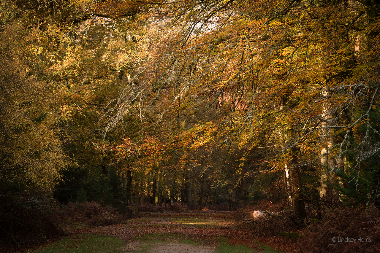 Autumn at Aldridge Hill Inclosure, New Forest.