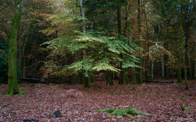 A Guide To The Best Autumn Colours In The New Forest