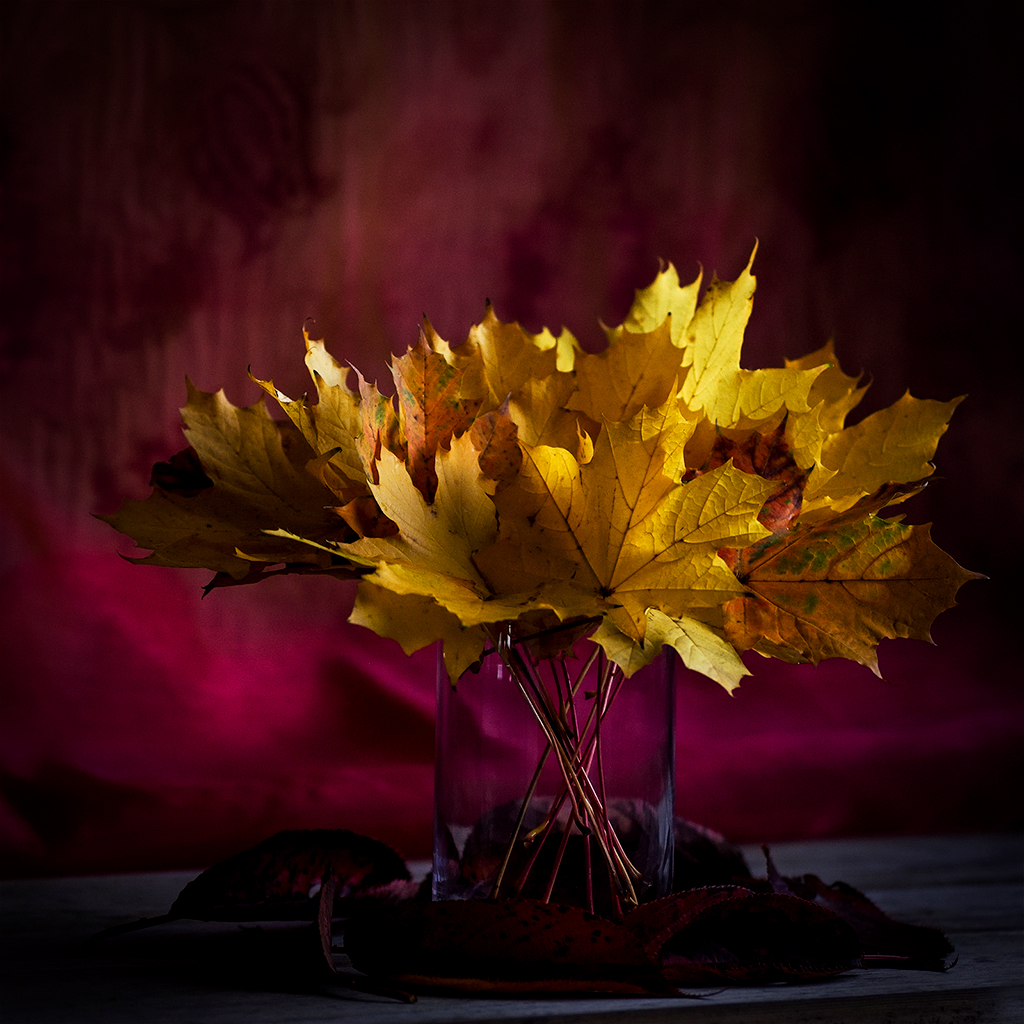 Photo of autumn leaves by Lindsey Harris.
