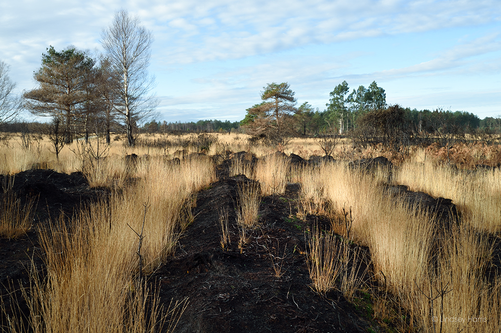 Wareham Forest, 6 Months after the May 2020 fire.