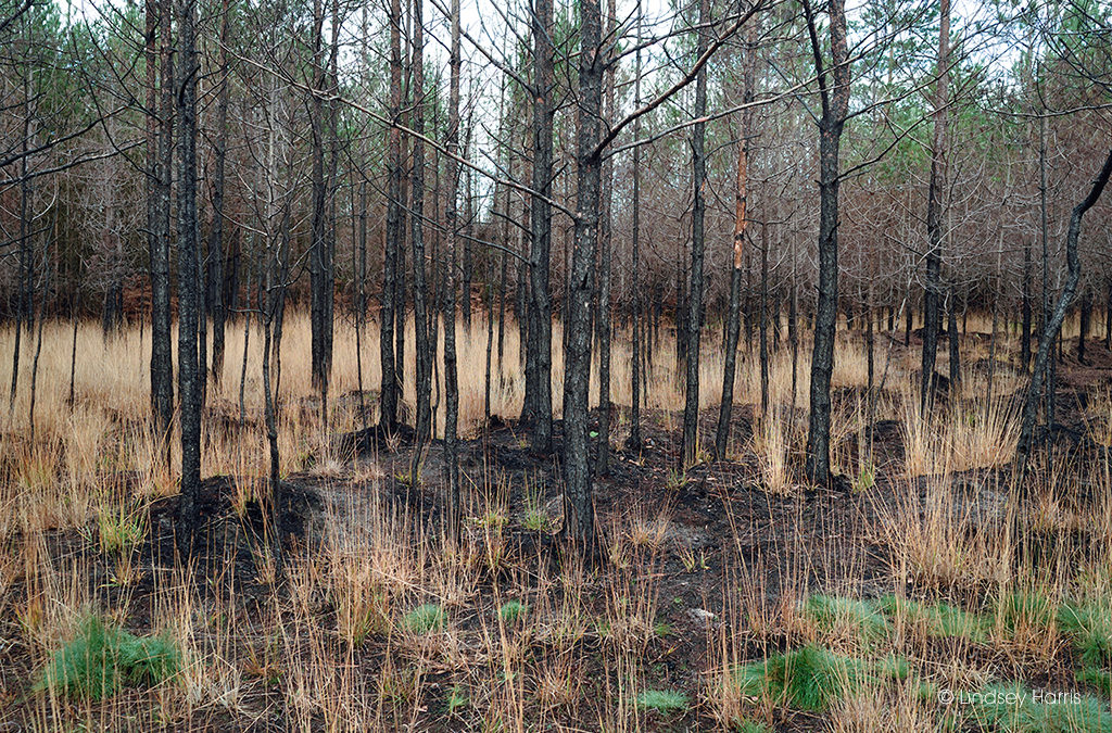 6 months after the Wareham Forest fire