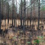 6 months after the Wareham Forest fire