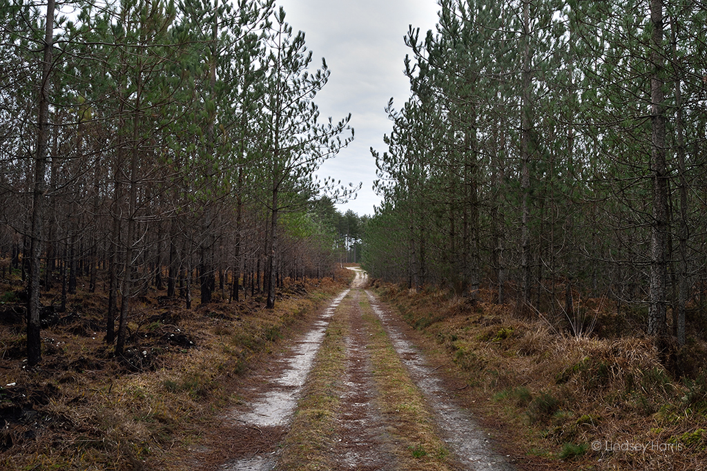 In some areas the forest fire was halted in its tracks by a path.
