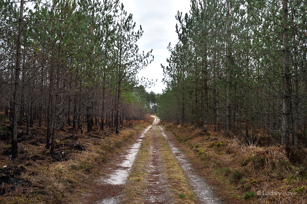 Some trees were spared during the May 2020 Wareham Forest fire.
