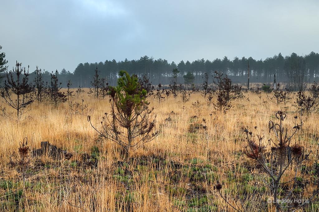 A few green shoots still left amongst the fire damage at Wareham Forest.