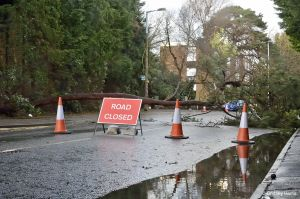 Tree down and road closed