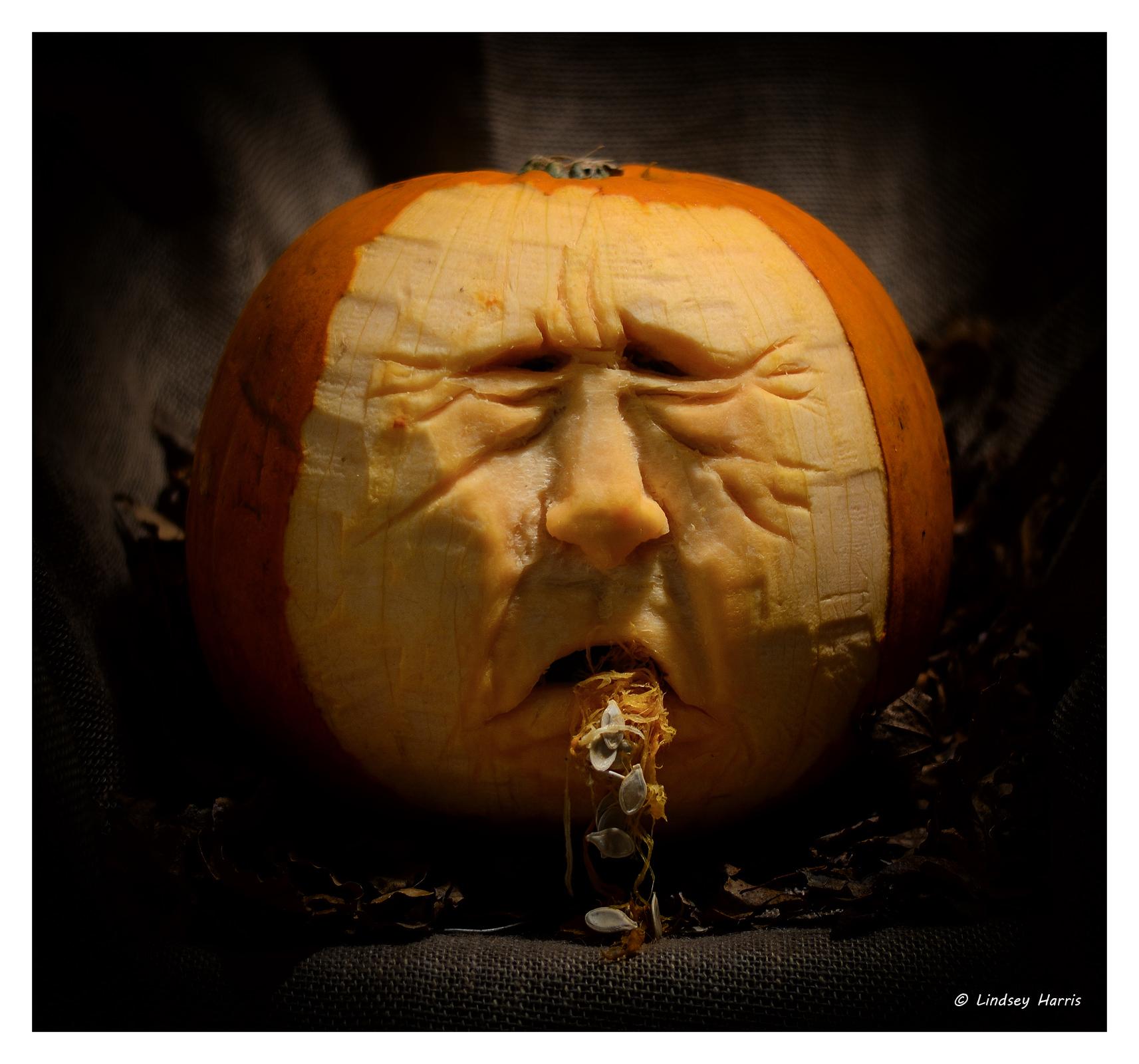 Halloween photos by lindsey harris