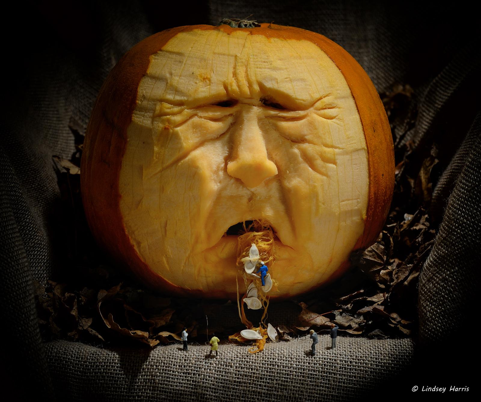 Carved pumpkins pumpkin carving by lindsey harris