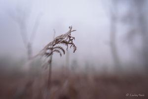 Bracken in the frost