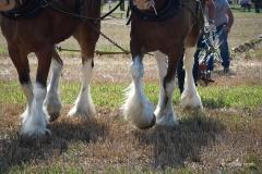 Heavy horses.