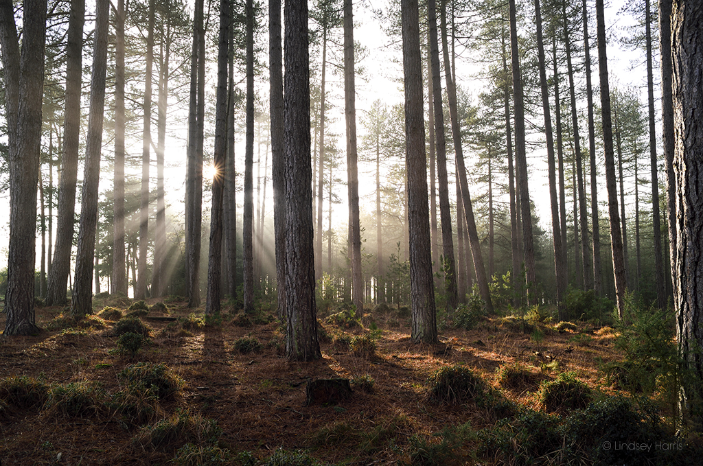Early morning sun at Wareham Forest.
