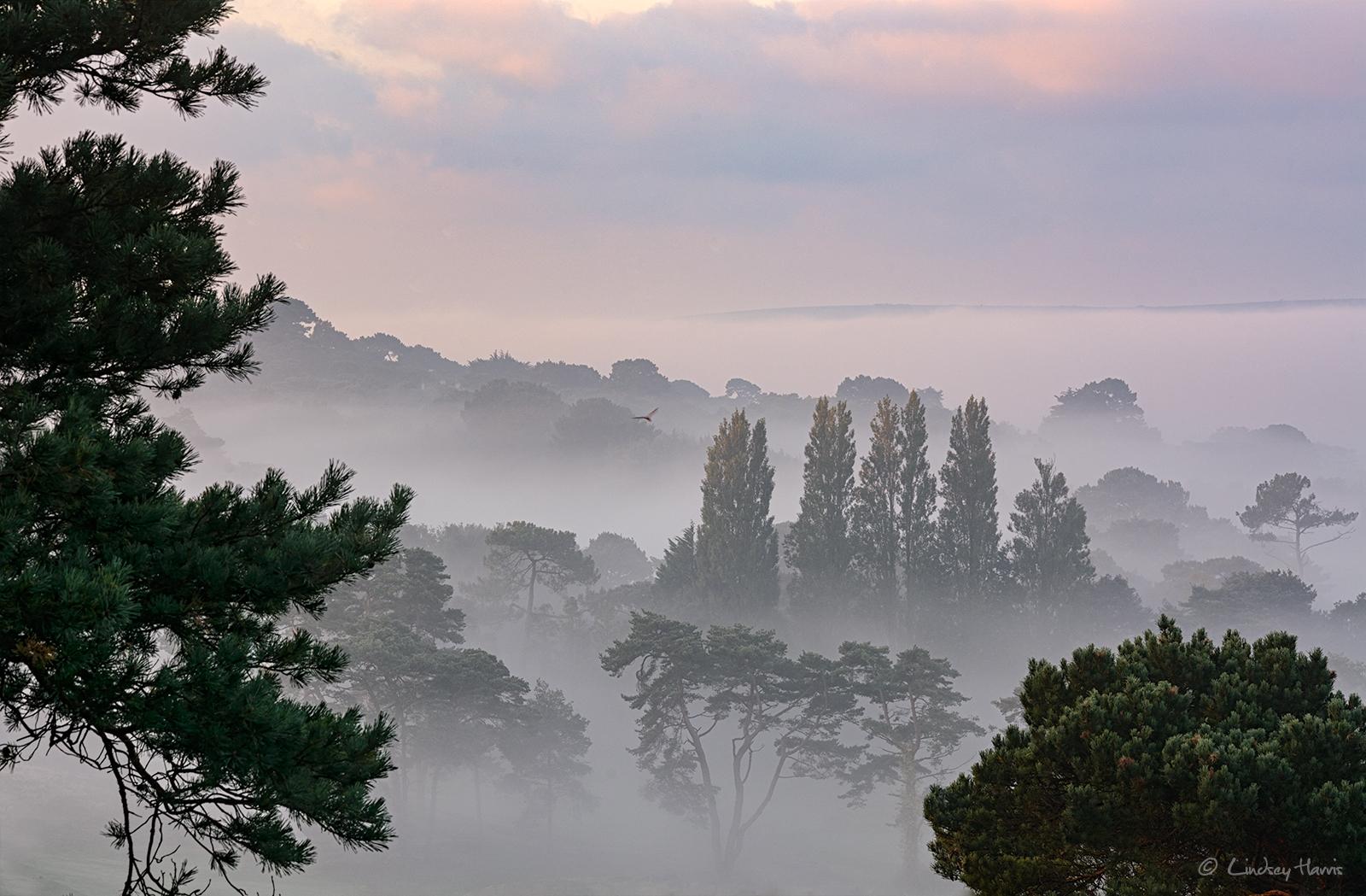 Early morning mist over Dorset.