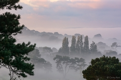 Early morning mist over Dorset.