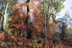 New Forest, autumn 2018. Amazing colours of the trees, bracken and fallen leaves.