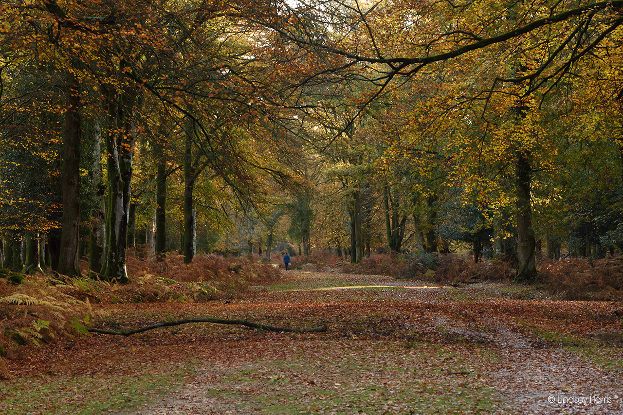 Autumn colours at Aldridge Hill, New Forest.