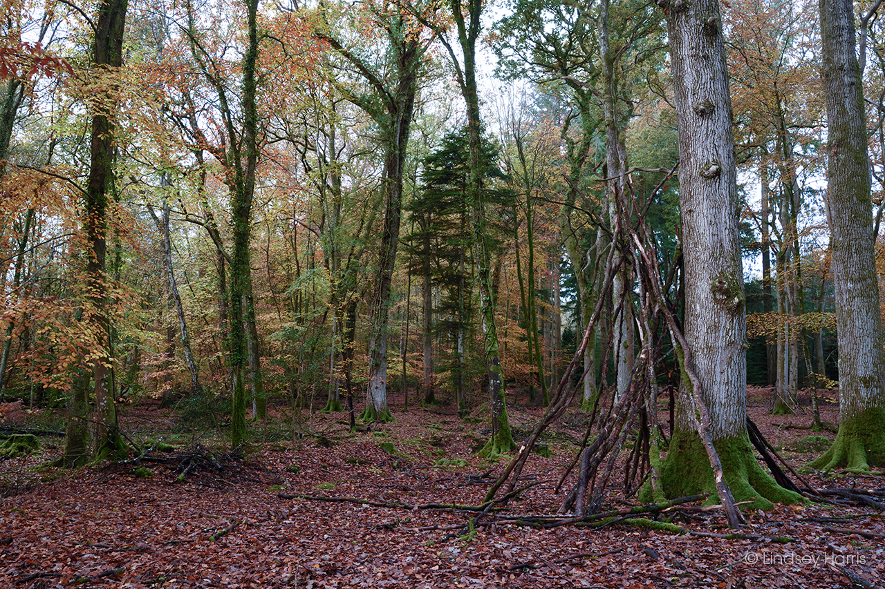 The remains of a den that has been built amongst the trees at Blackwater Arboretum, Rhinefield, New Forest.