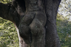 'New Forest Buttock Tree', aka 'The Tree Hugger'.