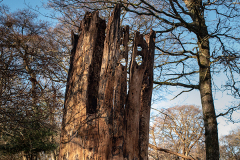 The interestingly-shaped remains of a tree, that looks like some kind of tower. I can imagine this being seen somewhere like Barcelona.