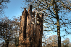 This New Forest tree looks like some kind of tower. I can imagine this being somewhere like Barcelona.