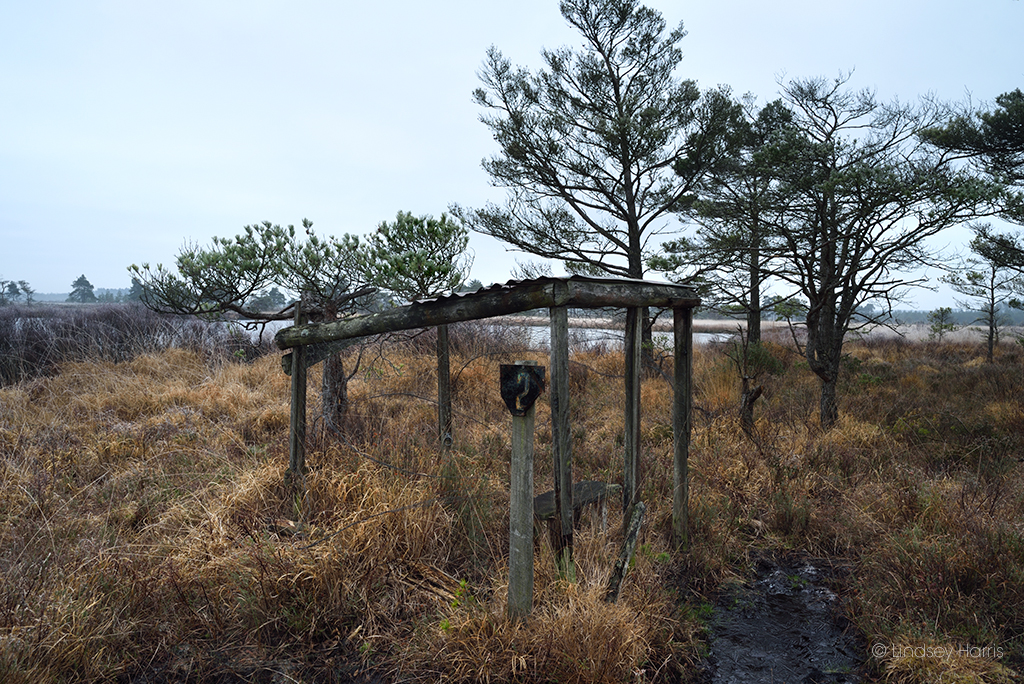 Number 2 hide at Old Decoy Pond, Morden Bog National Nature Reserve, Dorset.  One of the best preserved hides, complete with bench, wire and half a corrugated iron roof.
